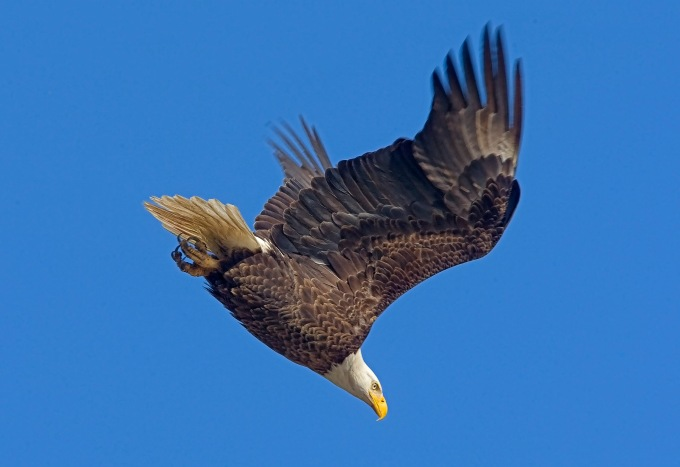 eagle bwr 09_MA_1100 hs
