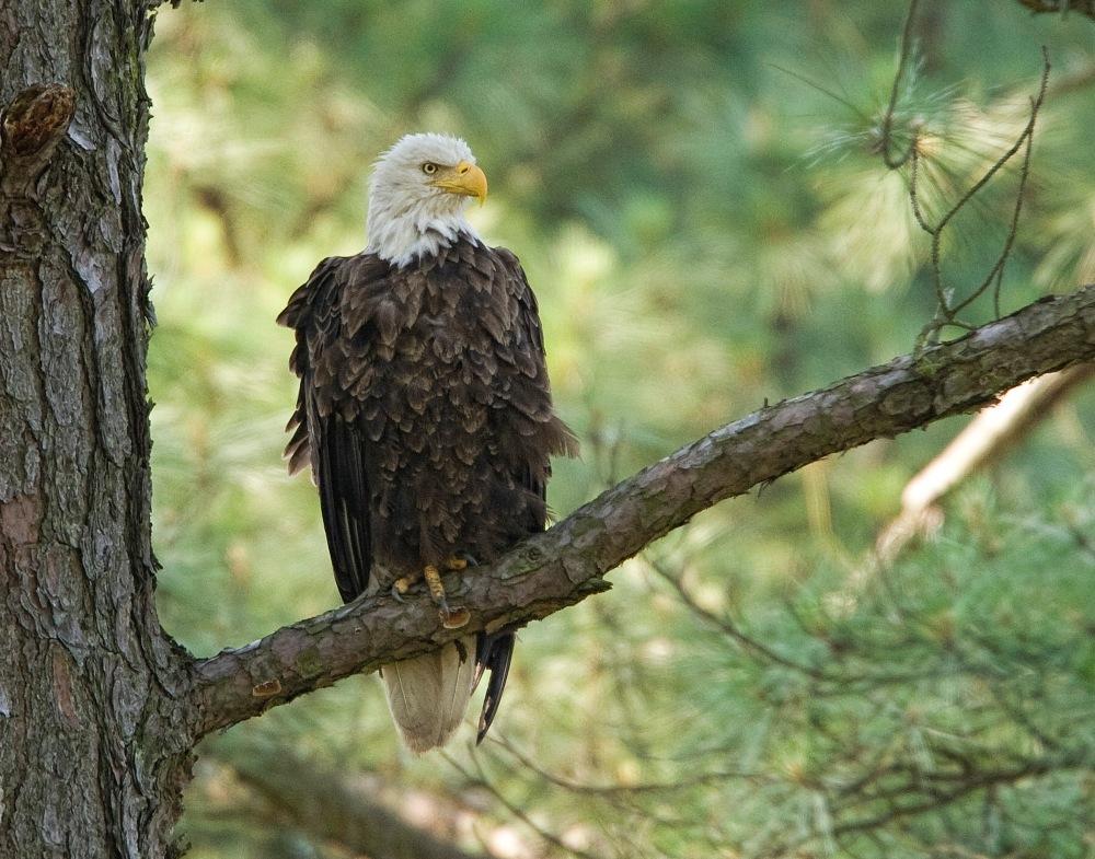 Eagle BWR 09_MA_8909cc1