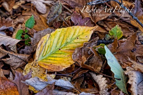 Fall one