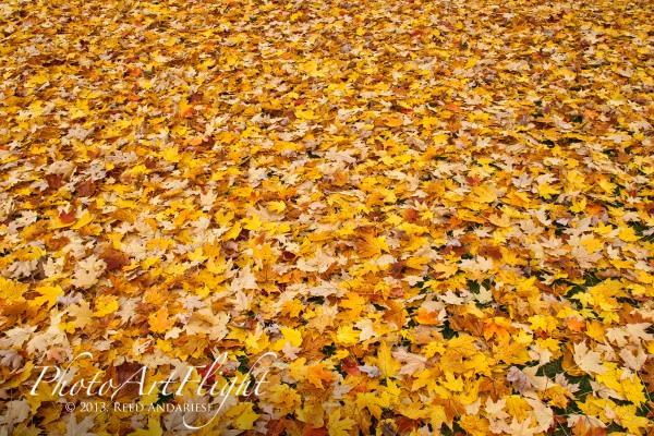 leaves_43G7810 copy