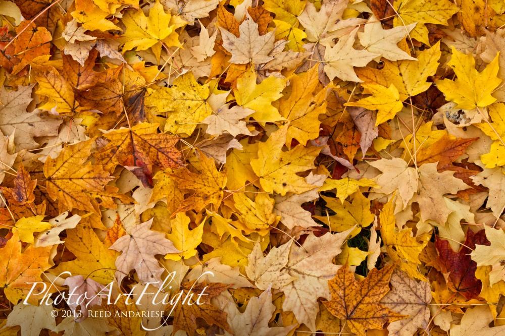 leaves_43G7821