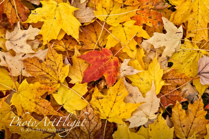leaves_43G7837