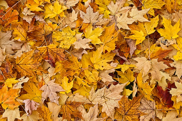 leaves_43G7821 v2