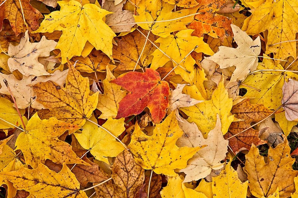 leaves_43G7837 v2
