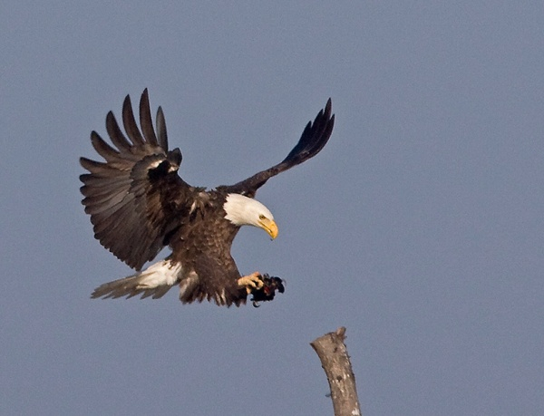 Eagle BWR 07 380I5033c hs