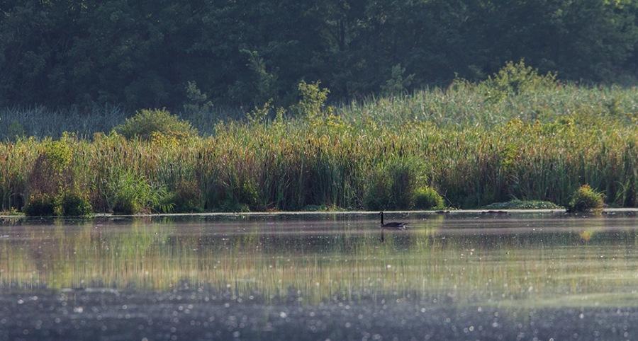 _43G4934 goose lake early am v2