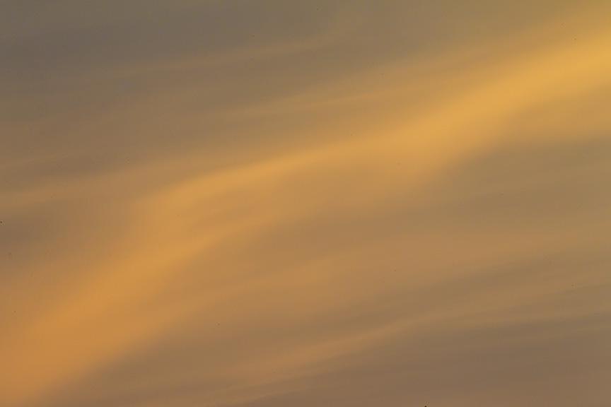 _43G2396 brig egret sunrise v1