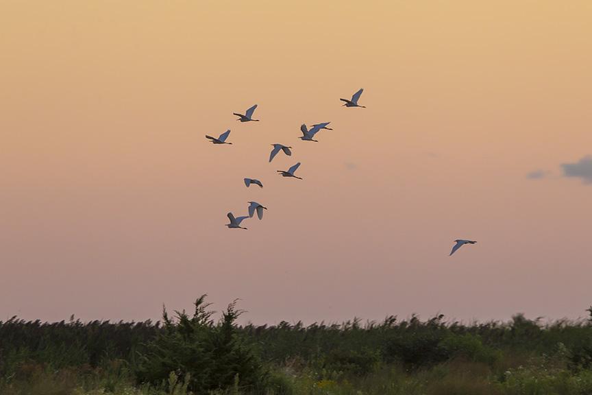 _43G2400 brig egret sunrise v2