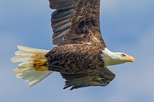 _43G9142 eagle1 v2
