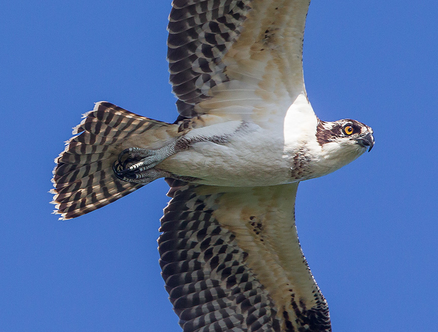 _43G9364 cf osprey v4