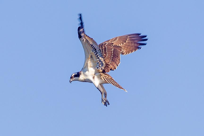 _43G9774 cf osprey v2