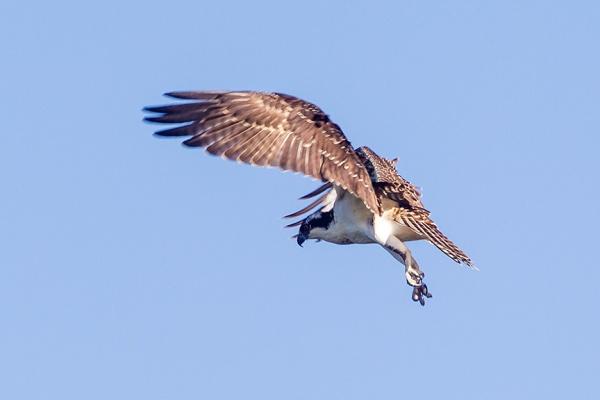_43G9776 cf osprey v2
