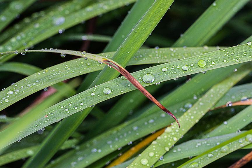 _80I3110 gw grasses water drops v1