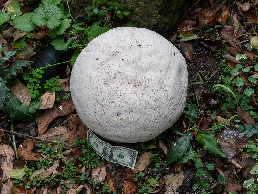 _1280700 yd giant puffball v1