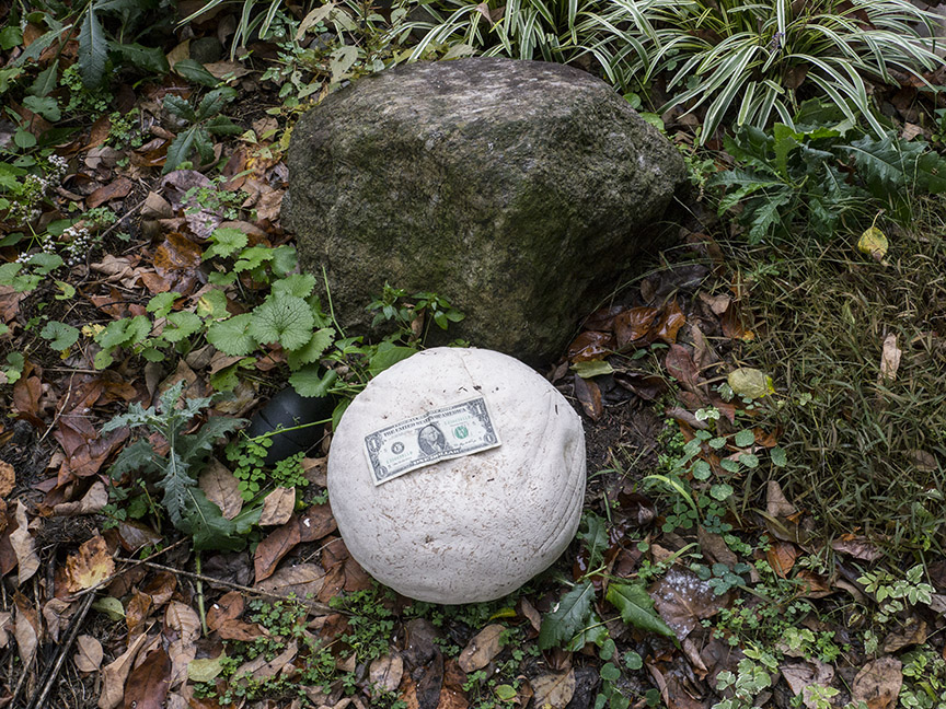 _1280704 yd giant puffball v1