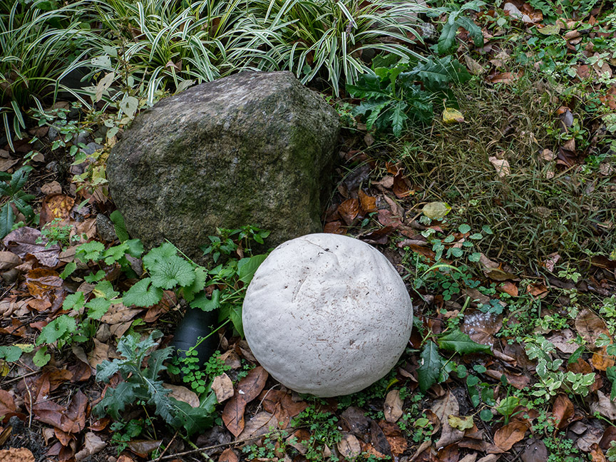_1280713 yd giant puffball v1