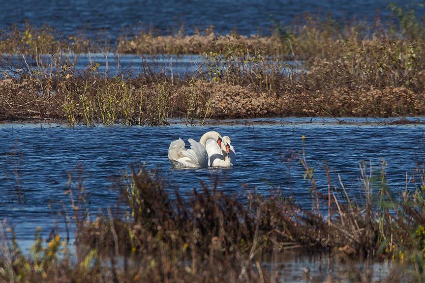_43G5119 brig swans v2