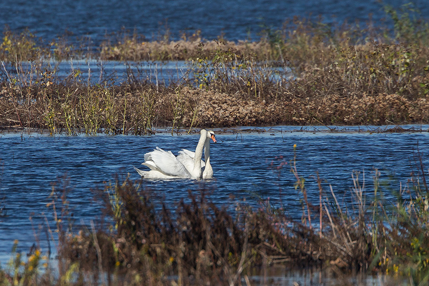 _43G5131 brig swans v2