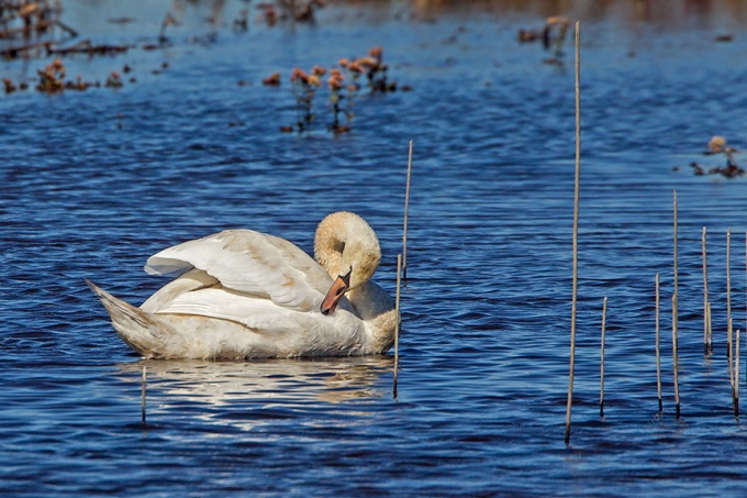 _43G5166 brig swans v3