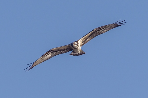 _43G8313 cf osprey v2