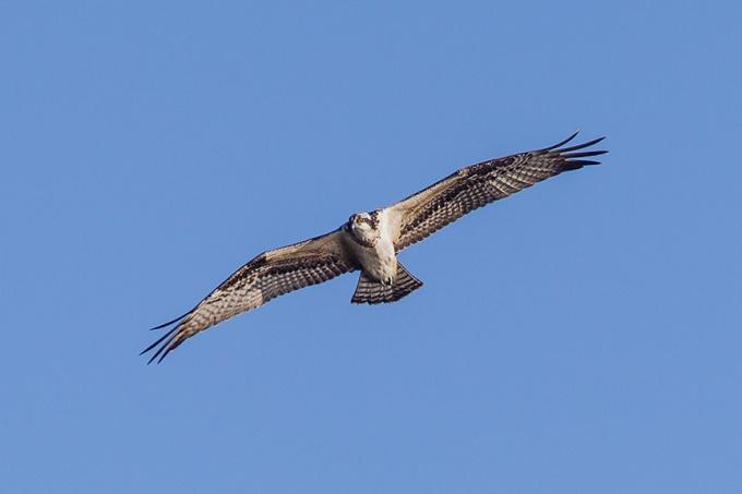_43G8315 cf osprey v3