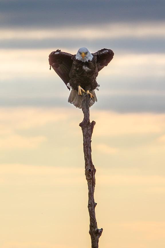 bwr eagle_43G0354 v3