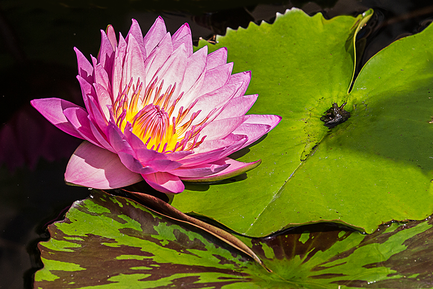 lg water lily v3 hp_43G4933