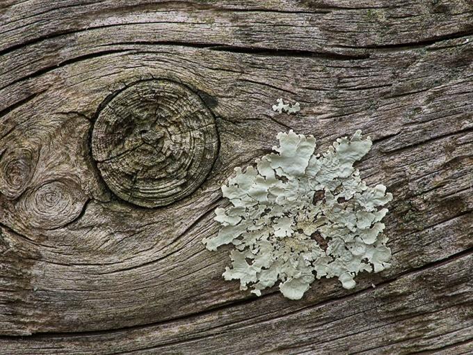 _1260344 lichen