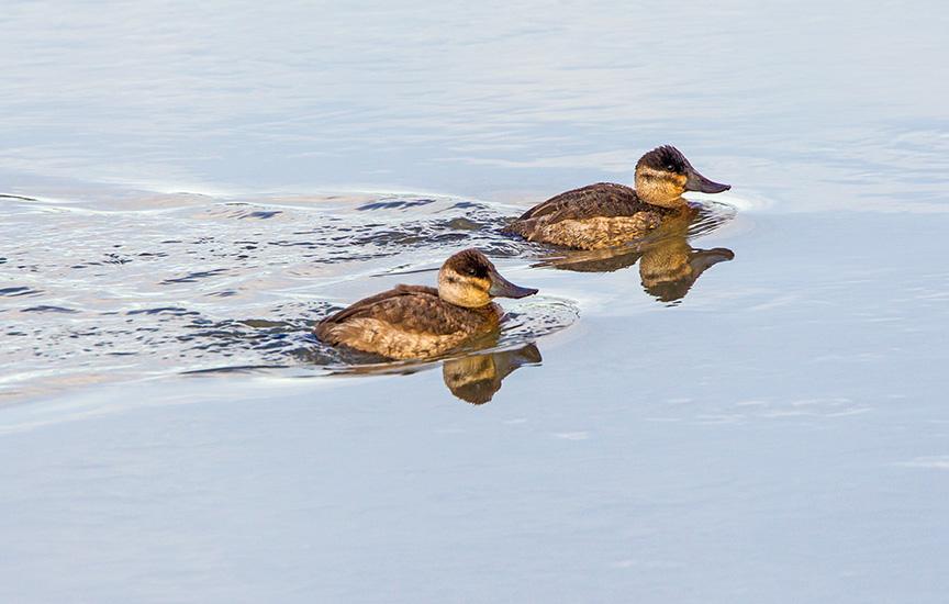 rudy ducks brig v2_43G3834