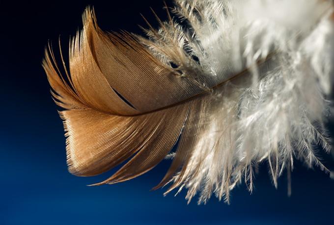 feather v1_43G5980 v2