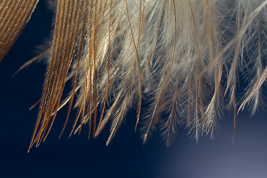 Feather v1_43G5993