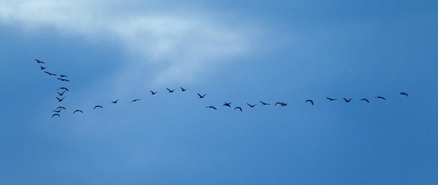brig am flyout cormorants v2