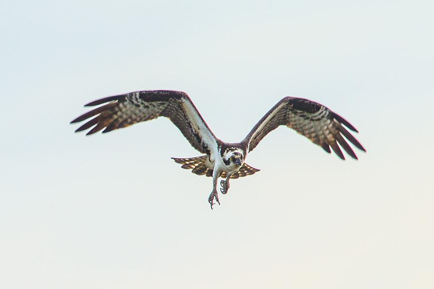brig osprey fight v1_43G9620