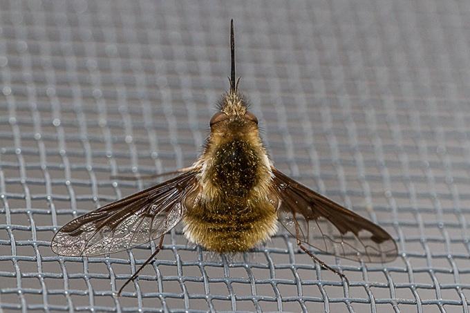 bug macro v1_MG_6436