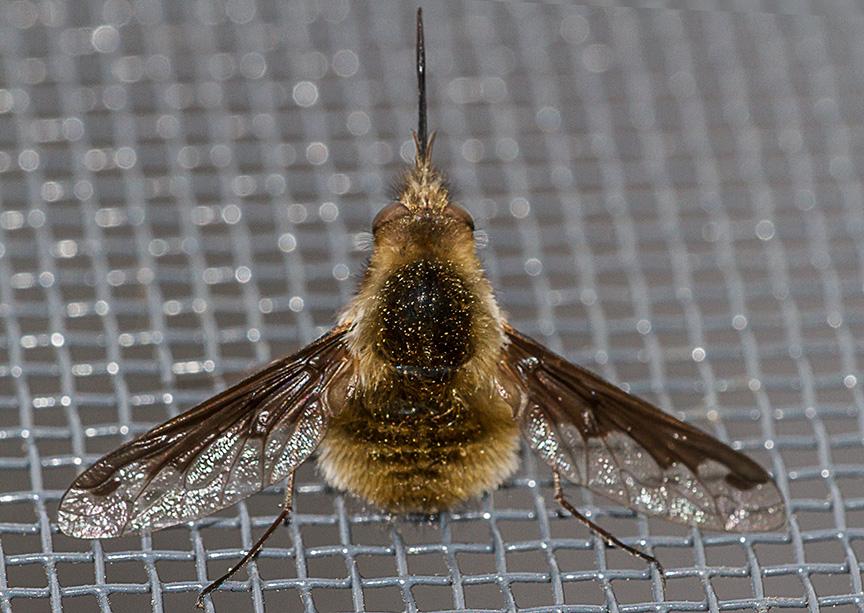 bug macro v1_MG_6441