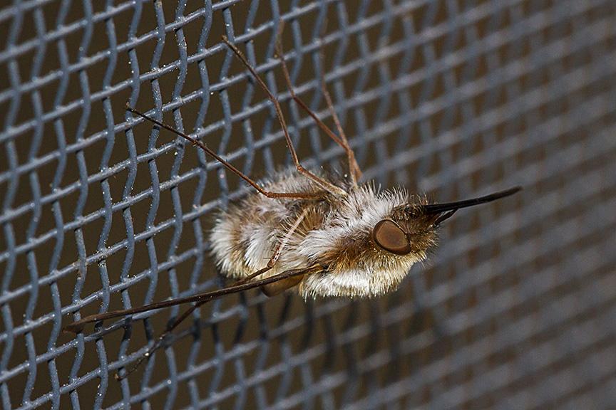 macro bug v1_MG_6456