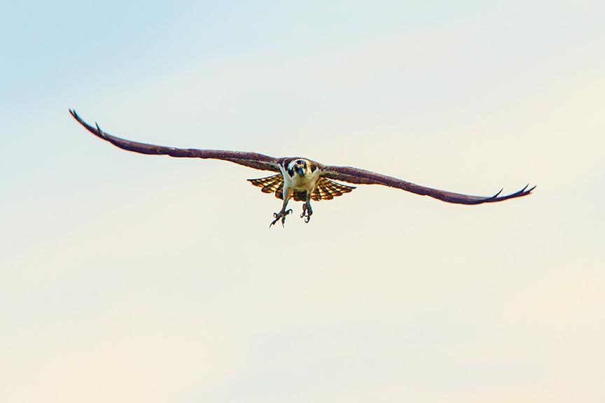 osprey brig v2_43G9614