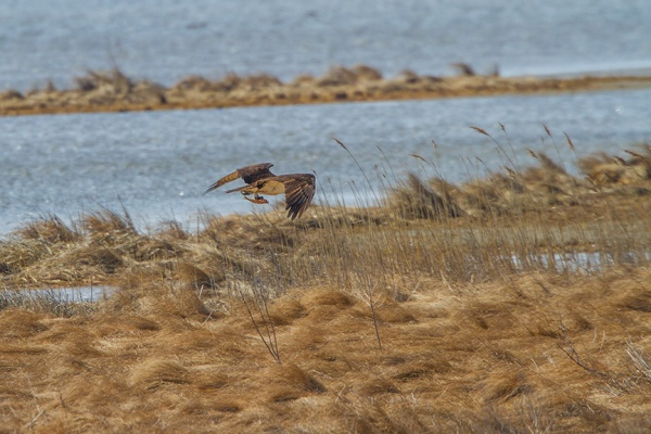 osprey fish brig v2_MG_5915