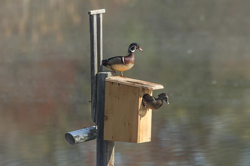 Duck Box exit v2 cf 2015_43G2048