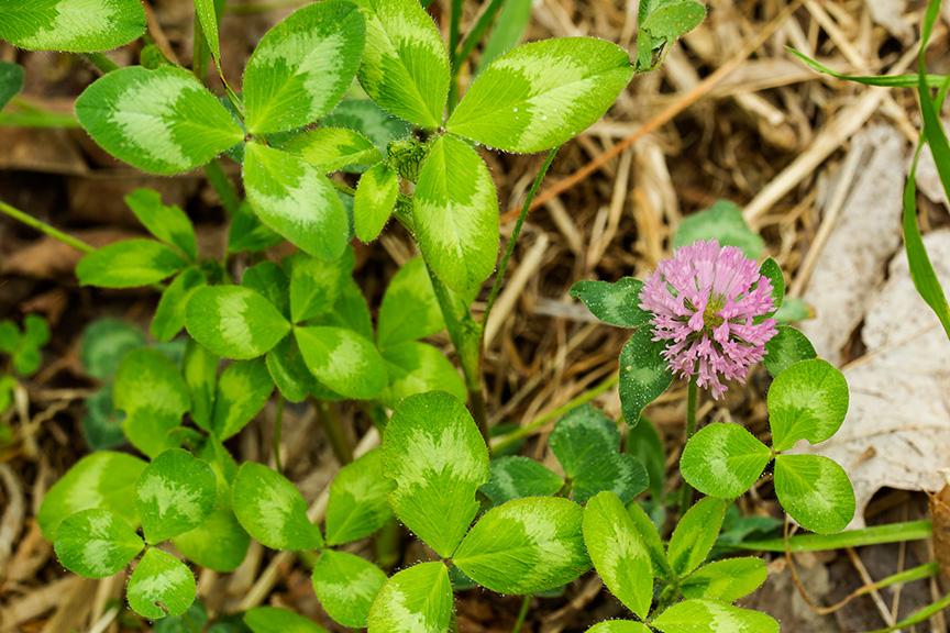 LWG Meadow Still Life_43G3221