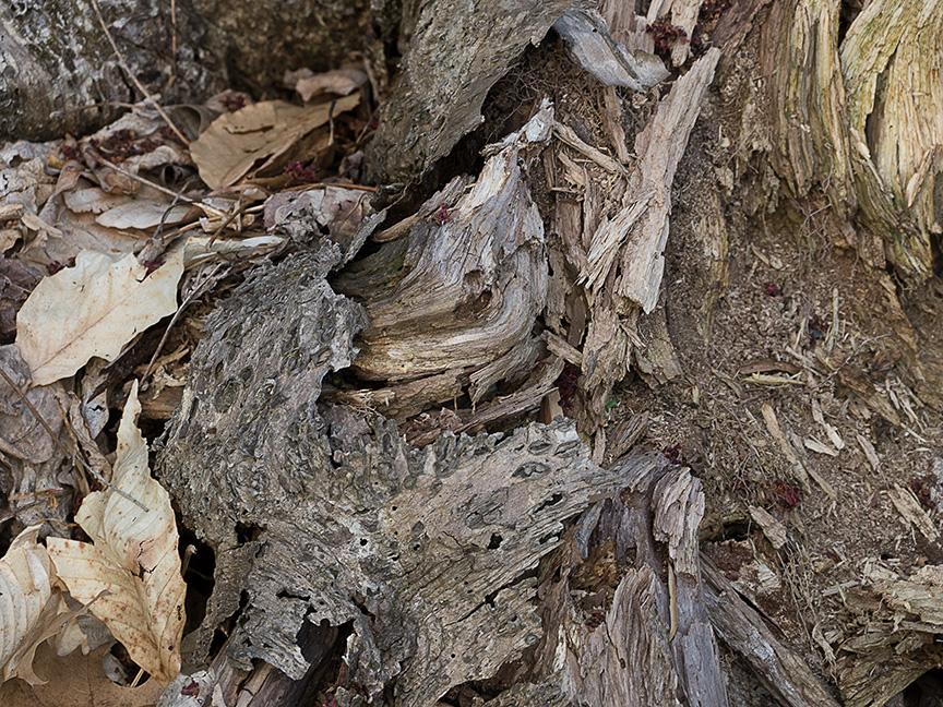Tree Limb v1 McFaul 2015_1290960