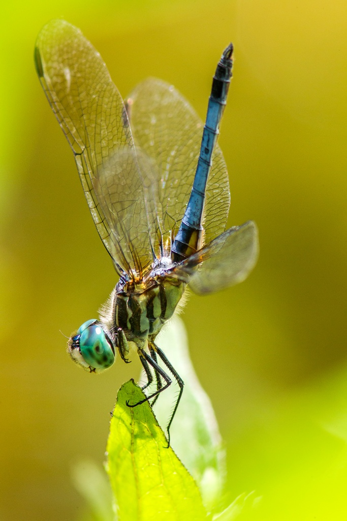 Blue Dasher v2 yard_43G0992
