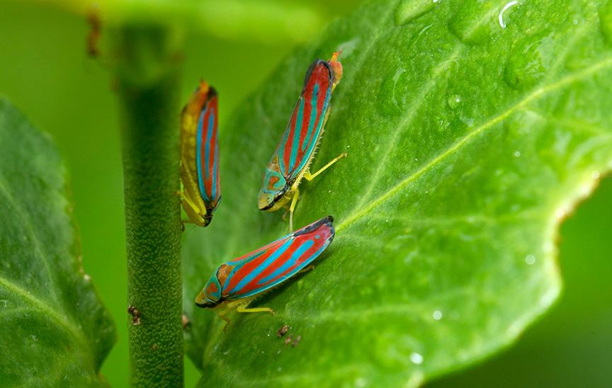 bugs yard v2_43G0177