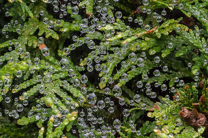 RainDrops on Web v1_MG_7388