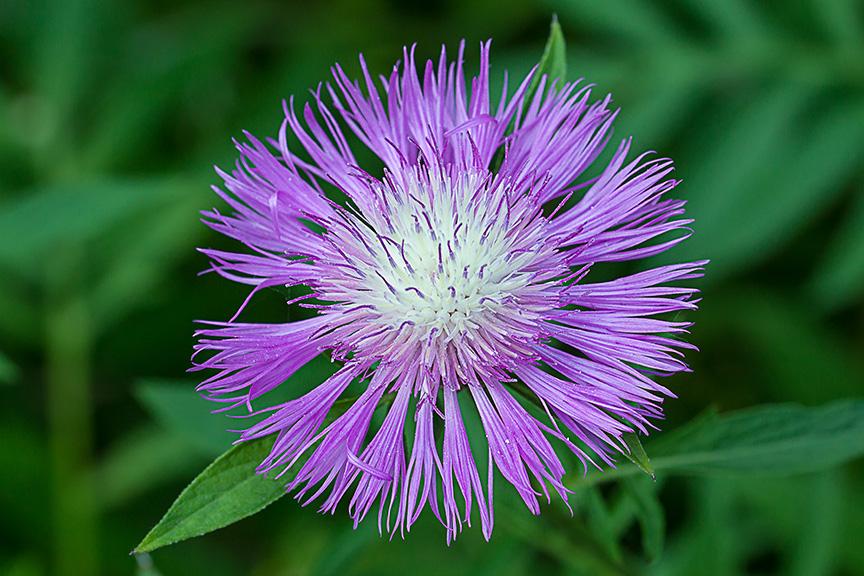 wg flower_v4 43G6783