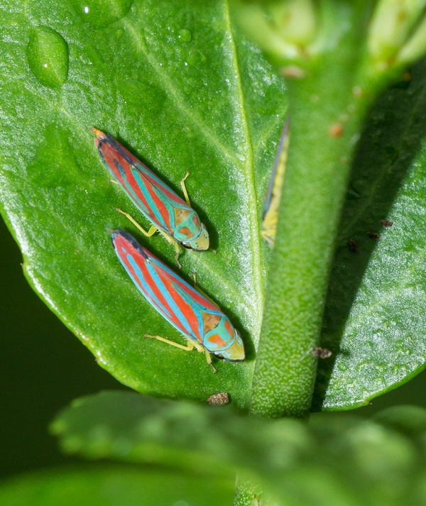 yard bugs v1_43G0173