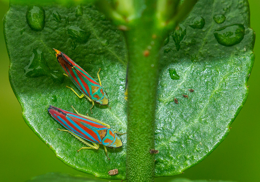 yard bugs v4 2015_43G0151