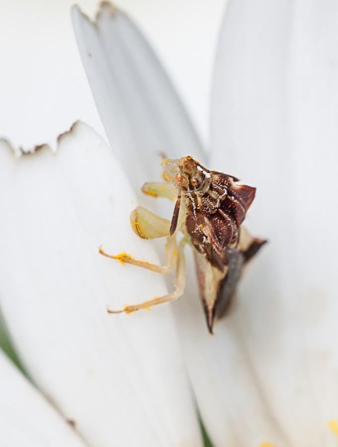Bug yard v2_80I5999