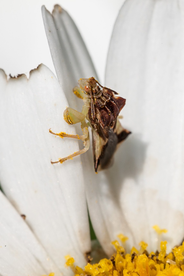 Bug yard v2_80I6065
