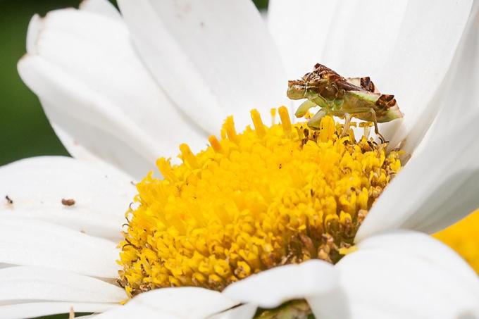 bug yard v3_80I6082